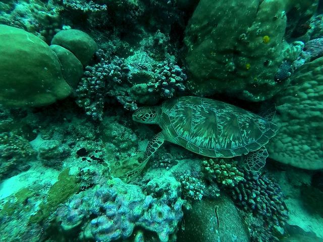 želva a Maledivy
